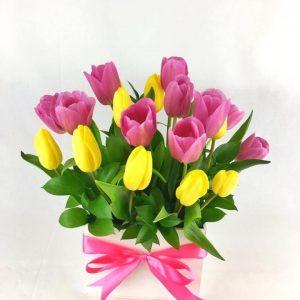 20 Tulipanes